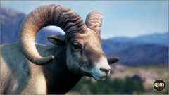 Bighorn Sheep - Games in Motion
