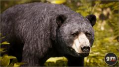 Black Bear - Gim - Realistic animated 3D model