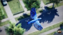 Bluebird - Gim - Realistic animated 3D model