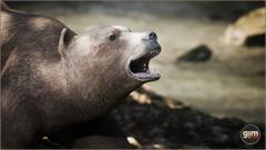 Brown Bear Female Gim Realistic Animated 3D Model