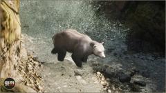 Brown Bear Male Gim Realistic Animated 3D Model