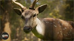 Chital_Games_in_Motion_Realistic_Animated_3D_Model-2