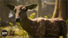 Chital_Games_in_Motion_Realistic_Animated_3D_Model-3