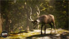 Chital_Games_in_Motion_Realistic_Animated_3D_Model-4