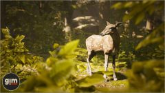 Chital_Games_in_Motion_Realistic_Animated_3D_Model-5