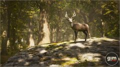 Chital_Games_in_Motion_Realistic_Animated_3D_Model-6