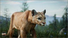 Cougar_M_01