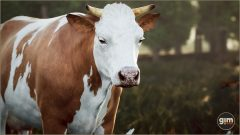 Cow - Gim Realistic Animated 3D Model
