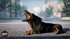 Dachshund - Games in Motion - Realistic Animated 3D Model-3