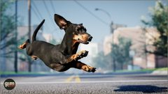 Dachshund - Games in Motion - Realistic Animated 3D Model