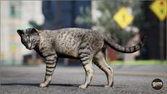 Domestic Cat Gim Realistic Animated 3D Model