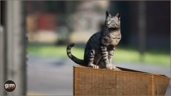 Domestic Cat Gim Realistic Animated 3D Model