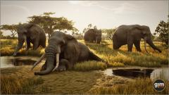 African Elephant - GiM