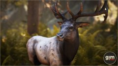 Elk - Games in Motion - Realistic Animated 3D Model