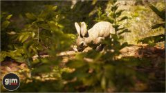 European Rabbit - Games in Motion - Realistic Animated 3D Model