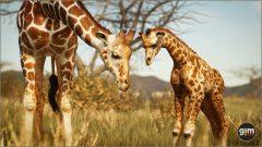 Giraffe_C_01