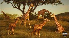 Giraffe_C_02