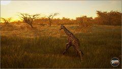 Giraffe_M_03