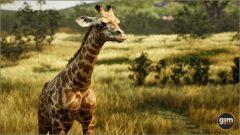 Giraffe_Y_02