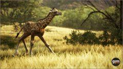 Giraffe_Y_03