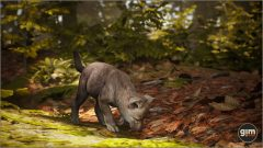 Grey Wolf Young - Games in Motion - Realistic Animated 3D Model