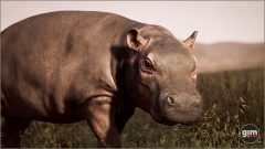 Hippopotamus-Games_in_Motion_Realistic_Animated_3D_Model-8