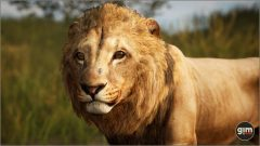 Lion-Games_in_Motion_Realistic_Animated_3D_Model-8