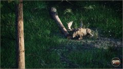 Moose_Games_in_Motion_Realistic_Animated_3D_Model-1