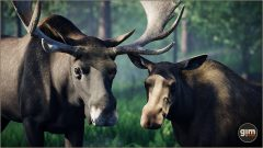 Moose_Games_in_Motion_Realistic_Animated_3D_Model-2
