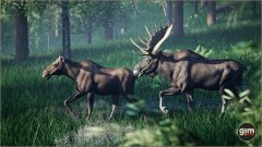 Moose_Games_in_Motion_Realistic_Animated_3D_Model-3