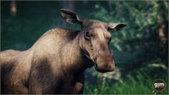 Moose_Games_in_Motion_Realistic_Animated_3D_Model-4