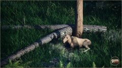 Moose_Games_in_Motion_Realistic_Animated_3D_Model-6