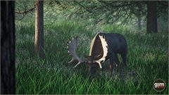 Moose_Games_in_Motion_Realistic_Animated_3D_Model-8