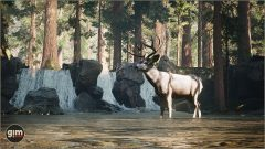 MuleDeer_Games_in_Motion_Realistic_Animated_3D_Model-11