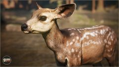 MuleDeer_Games_in_Motion_Realistic_Animated_3D_Model-12