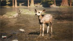 MuleDeer_Games_in_Motion_Realistic_Animated_3D_Model-13