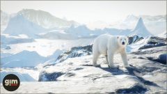 PolarBear_Games_in_Motion_Realistic_Animated_3D_Model-4