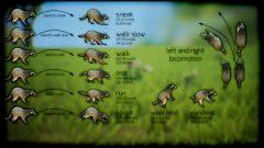 Screenshot_AnimalsRaccoon_04_C