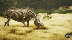WhiteRhinoceros_M_02_Bones