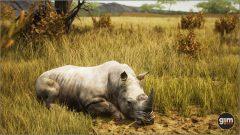 WhiteRhinoceros_M_03