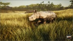 WhiteRhinoceros_Y_02