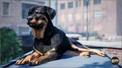 Rottweiler_Games_in_Motion_Realistic_Animated_3D_Model-2