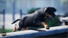 Rottweiler_Games_in_Motion_Realistic_Animated_3D_Model-5