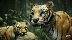 Tiger_Games_in_Motion_Realistic_Animated_3D_Model-1