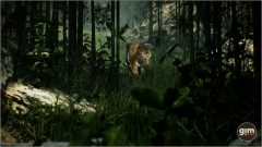 Tiger_Games_in_Motion_Realistic_Animated_3D_Model-6