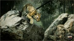 Tiger_Games_in_Motion_Realistic_Animated_3D_Model-8