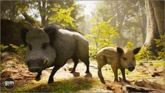 Wild_Boar_Games_in_Motion_Realistic_Animated_3D_Model-2