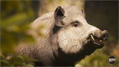 Wild_Boar_Games_in_Motion_Realistic_Animated_3D_Model-3
