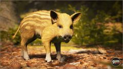 Wild_Boar_Games_in_Motion_Realistic_Animated_3D_Model-6