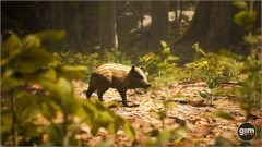 Wild_Boar_Games_in_Motion_Realistic_Animated_3D_Model-7